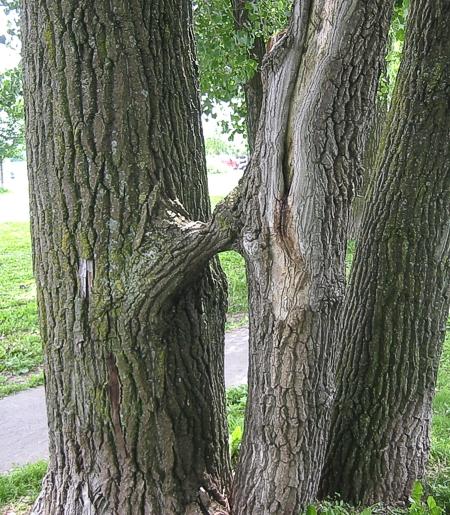 ilsserontvaincus_arbre 01