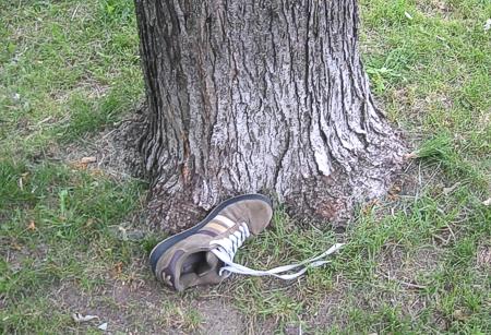 ilsserontvaincus_arbre 03